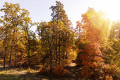 Photo sun, trees with yellow and green leaves in autumnal park at day