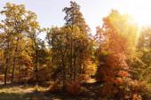slunce, stromy se žlutými a zelenými listy v podzimním parku ve dne