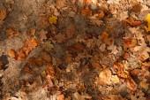 pohled shora na žluté a suché listy v podzimním parku na den