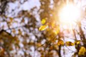 selektivní zaměření stromů se žlutými listy a sluncem v podzimním parku ve dne