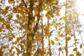 Fotografie stromy se žlutými a zelenými listy v podzimním parku ve dne