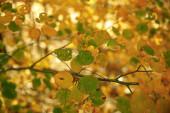 messa a fuoco selettiva di alberi con foglie gialle e verdi nel parco autunnale di giorno