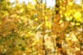 szelektív fókusz a fák sárga és zöld levelek őszi parkban nappal