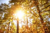 nap, fák sárga és zöld levelekkel az őszi parkban nappal