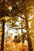 Fotografie slunce, stromy se žlutými a zelenými listy v podzimním parku ve dne