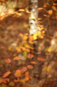 selective focus of trees with yellow leaves in autumnal park at day
