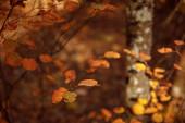 selektivní zaměření stromů se žlutými listy v podzimním parku ve dne