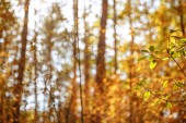 selective focus of trees with yellow and green leaves in autumnal park at day