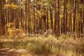 fák sárga és zöld levelekkel az őszi parkban nappal