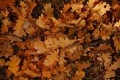 felső kilátás sárga és száraz levelek őszi parkban nappal