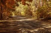 stromy se žlutými a zelenými listy v podzimním parku ve dne
