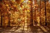 selektivní zaměření stromů se žlutými a suchými listy v podzimním parku ve dne