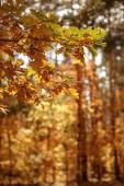 Fotografie selektivní zaměření stromů se žlutými a zelenými listy v podzimním parku ve dne