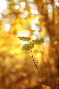 """Картина, постер, плакат, фотообои """"селективный фокус деревьев с желтыми и зелеными листьями в осеннем парке в дневное время постеры цветы фотографии природа"""", артикул 315116020"""