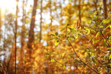 """Картина, постер, плакат, фотообои """"селективный фокус деревьев с желтыми и зелеными листьями в осеннем парке в дневное время постеры печать картины фото фотографии"""", артикул 315116070"""