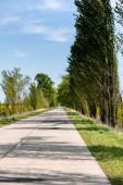 stíny na asfaltu u zelené trávy a stromů