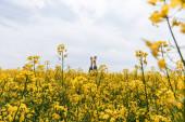 oříznutý pohled bosé ženy v blízkosti žlutých květin na poli proti obloze