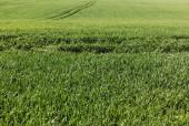sunlight on green grassy field in summer