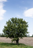 green tree with fresh leaves near green grass against blue sky