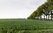 zöld fák a mező közelében friss fűvel nyáron