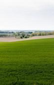 Photo fresh grassy field near trees and bushes