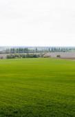 frisches Grasfeld in der Nähe von Bäumen und Sträuchern