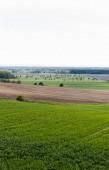 friss füves terület közel a zöld fák, föld és bokrok