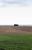 füves terület a föld közelében és zöld fák az ég ellen