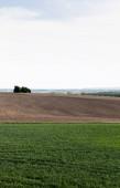 travnaté pole u země a zelené stromy proti zatažené obloze