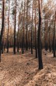 pozemní a vysoké stromy v letních lesích