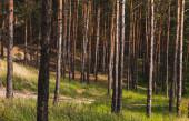 kmeny stromů v blízkosti zelené a čerstvé trávy v lese