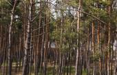 vysoké stromy se zelenými a čerstvými listy v lese