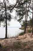 Fotografie zelené stromy v blízkosti rákosí a klidné jezero