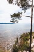 Photo sunlight on green pine tree near blue lake