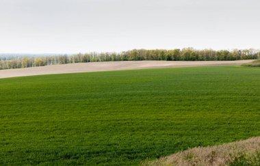 Fresh and green grassy field near trees stock vector