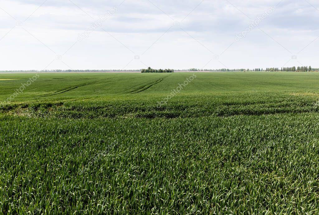 Sunlight on fresh grass in green field against sky stock vector