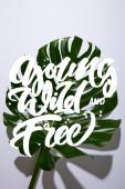frisches tropisches grünes Blatt auf weißem Hintergrund mit jungen, wilden und freien Illustrationen