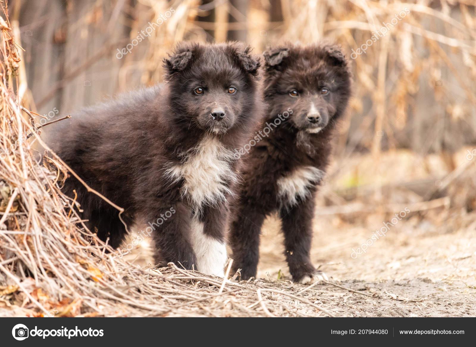 Due Cuccioli Svegli Piedi Vicino Vicenda Piccoli Cani Pelosi Neri