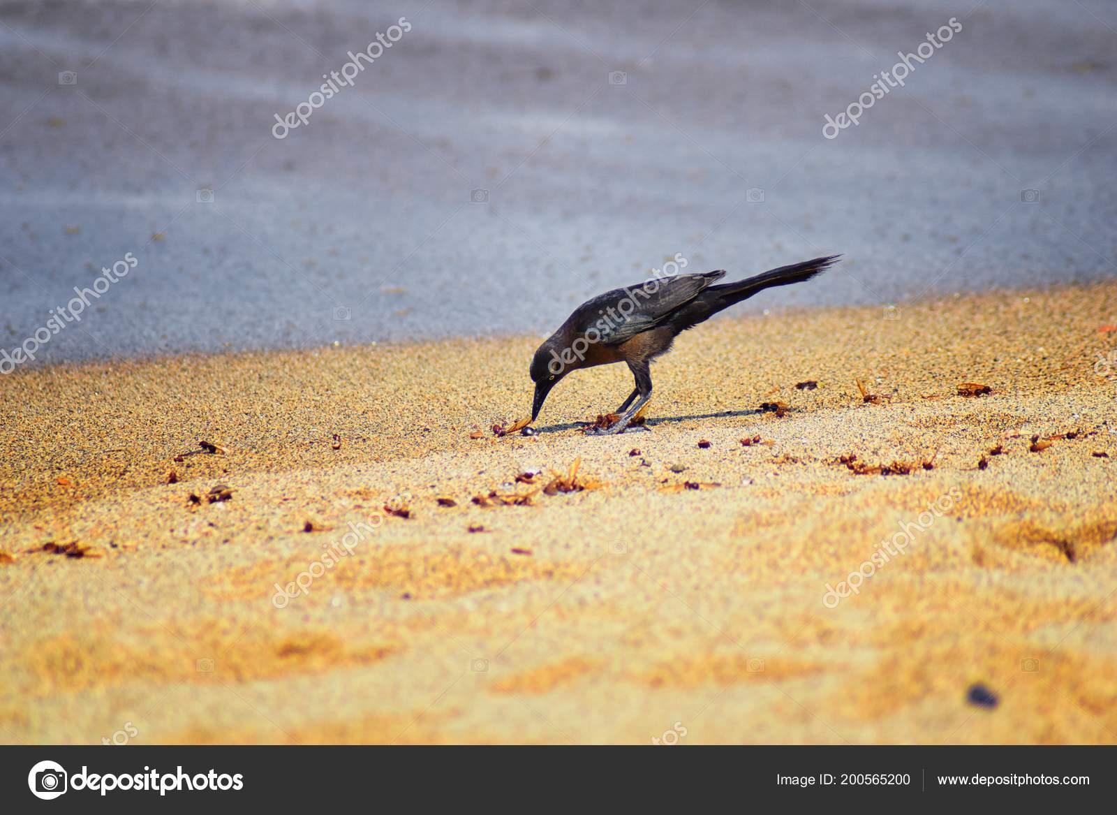 Jak polykat velkého ptáka