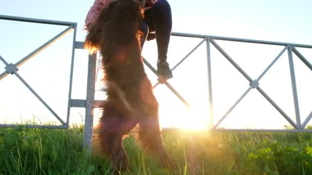 Woman scratches a dog at sunset, the pet rises on the hind legs