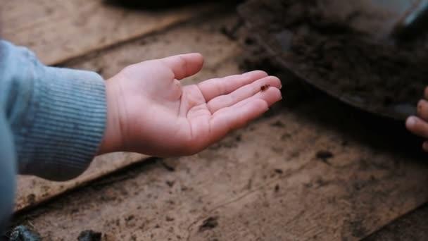 Husí kůže na rukou malé dítě, zpomalené hmyzu Beruška