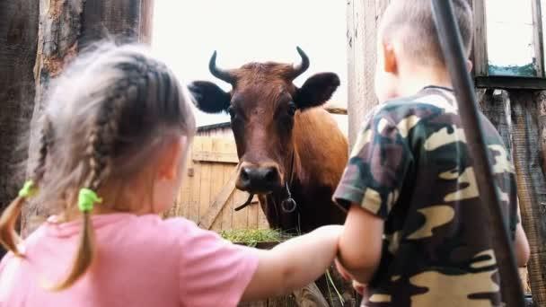 Kisgyermekek nézni egy szarvas tehén állt egy bódé, egy gazdaságban