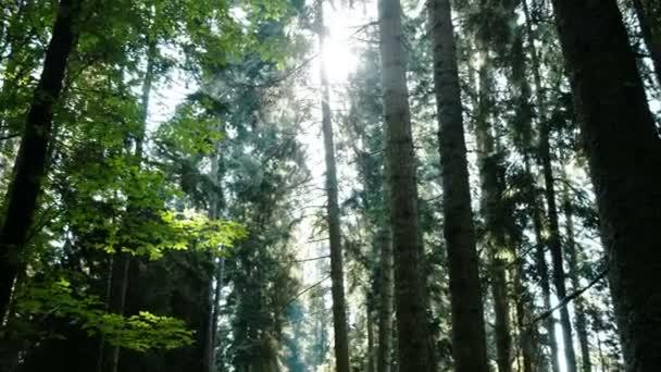 Mischwald im Sommer nachmittags Panoramablick, Kamerafahrt