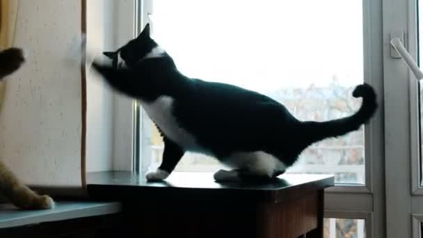 Kočky boj hrát doma na stole. Černé a červené kočky vtipné mávání tlapky