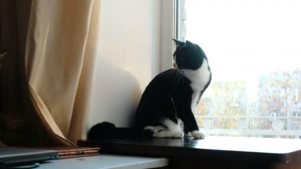 Černá kočička obrázky hd