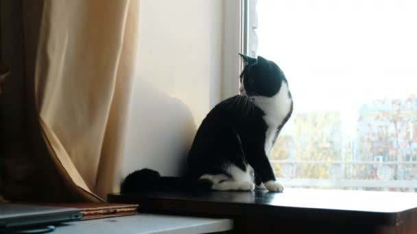 Černá kočička hd videa