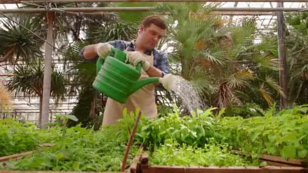 Člověk zahradník pracuje v zahradě, zalévání zelených sazenic s zalévání může.