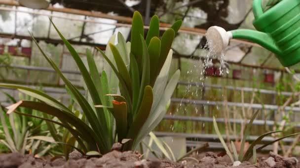 Növény megöntözte egy öntözés a természetben háttér.