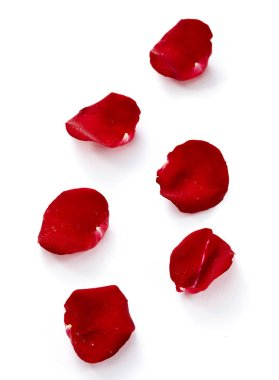 Red rose petals isolated on white background stock vector