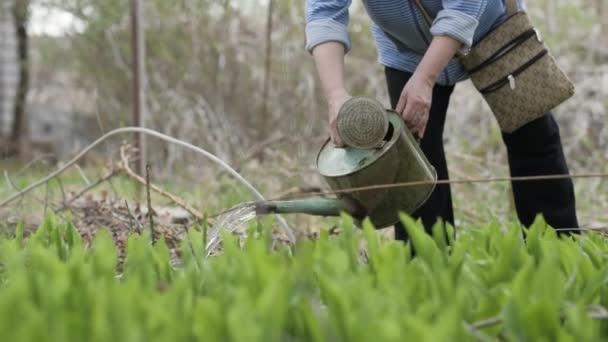 Dospělé ženy vylévá vodu z konve v zahradě. Zahrada a zahradnictví